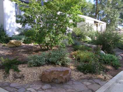 Xeriscaping-shrups and trees